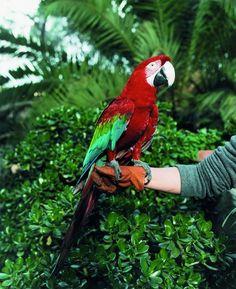 Annette Kelm - Turning into a Parrot, 2003 c-print — met Annette Kelm.