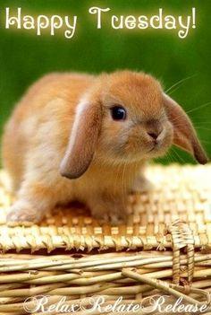 Happy Tuesday cute bunny via www.Facebook.com/RelaxRelateRelease