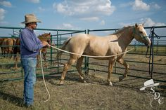 Ground work basics are key with every horse for greater success in the saddle.