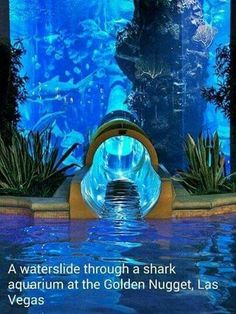 Shark Aquarium at the Golden Nugget in Las Vegas