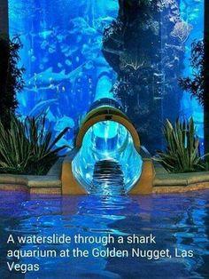Shark Aquarium at the Golden Nugget in Las Vegas