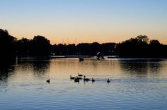 A soft northern light grazes the Serpentine, Hyde Park, London Hyde Park, Northern Lights, River, London, Outdoor, Outdoors, Big Ben London, Aurora, Rivers