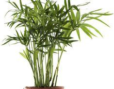 Ces plantes sont des bombes à oxygène et elles purifient l'air dans votre maison.