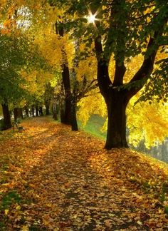 Beautiful World, Beautiful Places, Beautiful Pictures, Fall Pictures, Fall Photos, Autumn Lights, Autumn Scenes, Mellow Yellow, Autumn Leaves