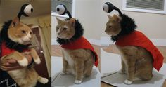 "Love your cat? Love Nibbler? Mix both this #Halloween with this ""Nibbler #Futurama Costume"" by Beetlecat"