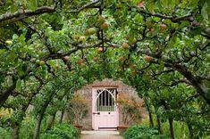 Apples in Highgrove's Kitchen Garden https://www.facebook.com/HighgroveShop/photos/pb.211200028960354.-2207520000.1432123937./829301830483501/?type=3&theater