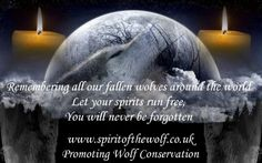 Wolves Wolf Spirit, My Spirit, Spirit Animal, All Quotes, Motivational Quotes For Life, Best Quotes, Wolf Photos, Wolf Pictures, Beautiful Creatures