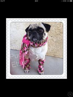 Scar&Leg-warmer set-pugs-clothing for pugs-winter clothes for dogs-leg-warmers for dogs-pug clothing-pink by PugsNGiggles on Etsy https://www.etsy.com/listing/205146588/scarleg-warmer-set-pugs-clothing-for
