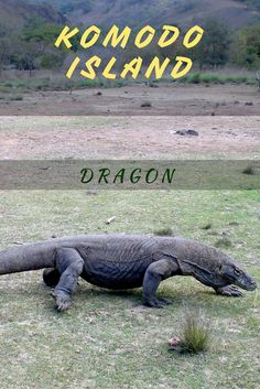 My Komodo Island tour showed me a tropical paradise with amazing wildlife, hiking, scenic views and crystal clear water. Komodo National Park, National Parks, Komodo Island Tour, Monitor Lizard, Apex Predator, Bali Travel, Tropical Paradise, Amazing Destinations, Snorkeling