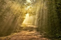 Road to the light for by Andy 58