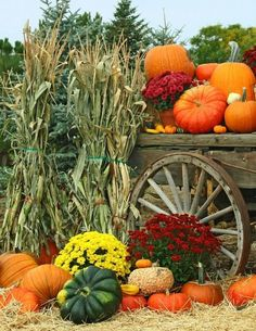 Gardening Autumn - Autumn garden harvest - flowers, pumpkins, mums - fall decorating - With the arrival of rains and falling temperatures autumn is a perfect opportunity to make new plantations Mums In Pumpkins, Fall Pumpkins, Harvest Time, Fall Harvest, Deco Haloween, Autumn Scenes, Fall Pictures, Fall Pumpkin Pictures, Harvest Pictures