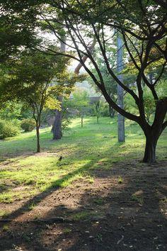 [2012.10.12] 북서울꿈의숲 X-Pro1    후지필름 3기 객원리포터 한국외대 정성재 님의 작품입니다.    북서울꿈의숲에 내리쬐는 빛이 따스하게 느껴집니다.    이번 주말, 도심 속 크고 작은 공원에서 책 한권 읽으며    여유로운 시간을 보내보는 건 어떨까요?    <사진정보>    조리개값: F/4  노출시간: 1/100초  ISO감도: ISO-200  초점거리: 35mm    http://blog.naver.com/fujifilm_x/150144057801