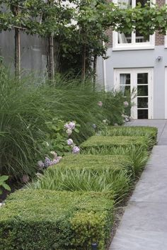 ☆Love this modern look with the boxwood grouped together to form squares, interspersed with grasses.