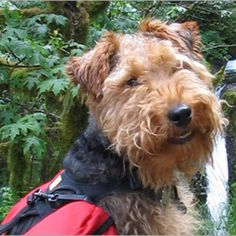 Top CT Trails Ranked for Hiking with Your Dog