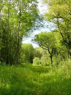 Snarkhurst Woods, Kent, England, ancient woodland by Penny Mayes, via Geograph