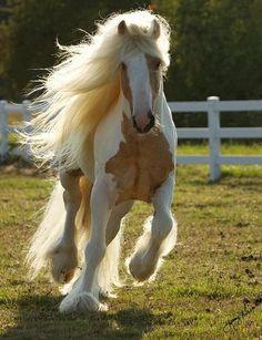 Stunning horse