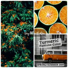 Turmeric is an enlivening orange designated by Pantone as one of the Spring/Summer 2019 Color Trends. #pantone #colortrends