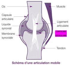 articulation mobile