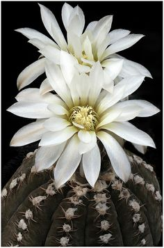 Even the cactus explodes with bloom, when its roots have found the soil that feeds what is unseen. ~ M.C.