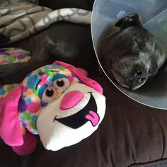 When you're recovering from surgery, there's nothing better than a woobie and a nap. Photo by Shar N Tan.