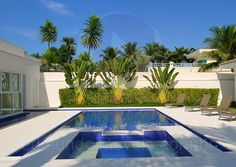 Próximo ao muro, o paisagista propôs a plantação de arbustos médios, além de palmeiras leque e coqueiros.