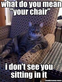 "What do you mean ""your chair"" I don't see you sitting in it viaC.A.A. - cat addicts anony-mouse #lolcat #hahacat"