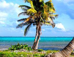 Conoce el parque nacional Arrecifes de Xcalak en el corazón de la Costa Maya