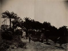 https://flic.kr/p/7V42Wb | Scene Ebute Metta Natives off Marketing. Palm Trees in rear. | Creator: H. Hunting Title: Scene Ebute Metta Natives off Marketing. Palm Trees in rear. Date: [between 1910 and 1913] Extent: 1 photograph: black and white (15 x 20cm) Notes: Title transcribed from caption Picture shows men and women on a road in Ebute Metta, Nigeria, carrying items on their head.  From a two volume set of photographic albums containing 130 photographs. Photographs depict…