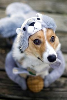 adorable dog costume pic                                                                                                                                                                                 More