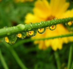 Yellow flowers in raindrops 1 by tanakawho, via Flickr