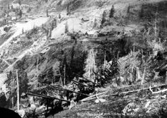 A man leads a pack train loaded with long pipes up a steep path, possibly in the San Juans, Colorado. Tailings, mines, and wood frame structures cling to the slopes in distance. 1910/1920. Creator(s) Walker Art Studio. Courtesy: Western History/Genealogy Department, Denver Public Library, Denver, Colorado (USA).