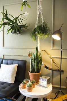 Decora Rosenbaum Temporada 2 - Sala de República. Decoração com plantas. Foto: Felipe Felco Valle