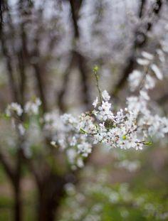 Bokeh Photography, Primroses, Spring Sign, New Leaf, Four Seasons, Dandelion, Garden, Flowers, March
