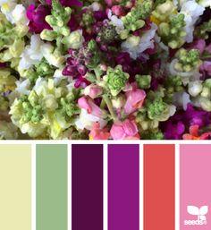 color snap
