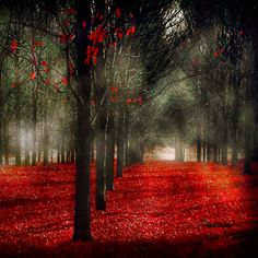 Autumn photograph, enchanted forest print red and black fog fall home decor with a gothic feel dark moody. $15.00, via Etsy.