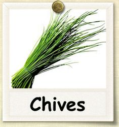 Guide to Growing Herbs. I have 3 bunches of chives growing in my backyard pots. I love to go snip just what I need. They are expensive at the store and go bad so quickly. Allium Schoenoprasum, Cooking With Fresh Herbs, Vegetable Crisps, Fresh Chives, Grow Chives, Dried Peppers, Planting Vegetables, Veggies, Herb Seeds