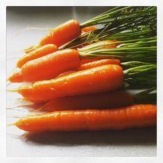 Net geoogst.  #moestuin #groenten #gezond #wortel