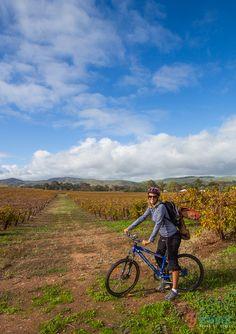 Go biking in the Barossa Valley, South Australia