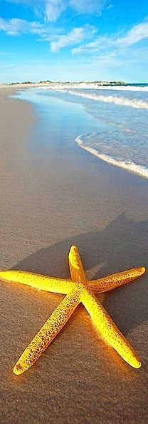 Yellow #Starfish