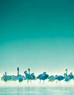 Aqua Shades Of Turquoise, Bleu Turquoise, Aqua Blue, Shades Of Blue, Pink, Beautiful Birds, Beautiful World, Simply Beautiful, Behind Blue Eyes