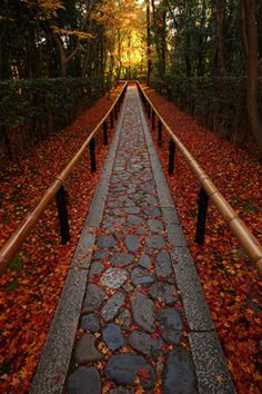 fallen leaves path