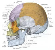 http://www.arteetnicoafricano.com/etniasafricanas/etnia-bamun.aspx  Los jóvenes de la etnia bamun custodian los cráneos de sus antepasados, pues estos llevan al espíritu de los mismos.