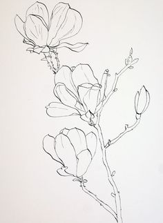 Pen Drawings of Flowers | Completed ink drawing of pink magnolia flowers prior to laying down a ... #inkdrawings