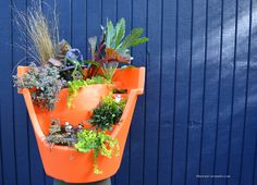 Brilliant Halloween broken pot container fairy garden for the season. Multiple levels of container garden are available so you can tell a Halloween story.