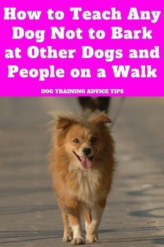 How Can You Train A Dog Not To Bark And Pics Of How To Get Your