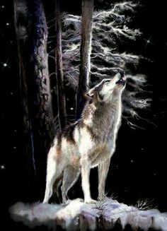 Wolf Images, Wolf Photos, Wolf Pictures, Howling Wolf Tattoo, Wolf Howling At Moon, Wolf Spirit, Spirit Animal, Owen Wolf, Baby Wolves