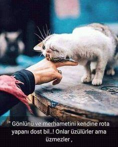 Doğa Ve Hayvan Sevgisi'in Instagram gönderisi • 15 Nis, 2019, 12:58ös UTC Spirituality, Cats, Instagram Posts, Nature, Knowledge, Animals, Life, Gatos, Naturaleza