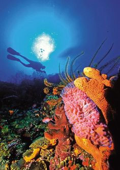 St. Lucia...first time I went scuba diving, so beautiful.