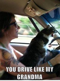 Road rage ....