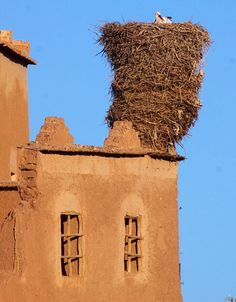 White Stork nest on top of a house in Morroco